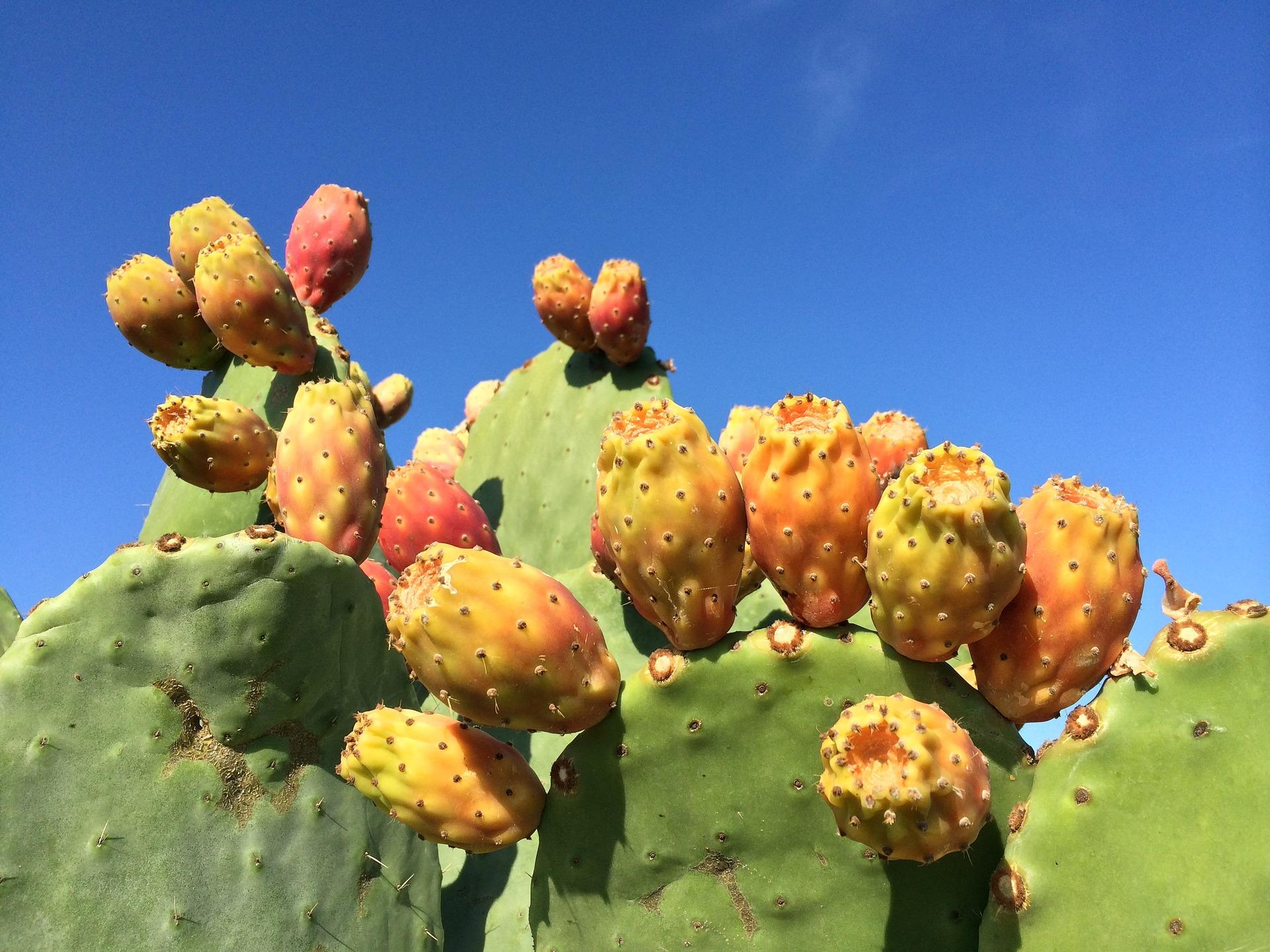 Fall Cactus Image