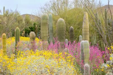 arizona-spring-freepik.jpg