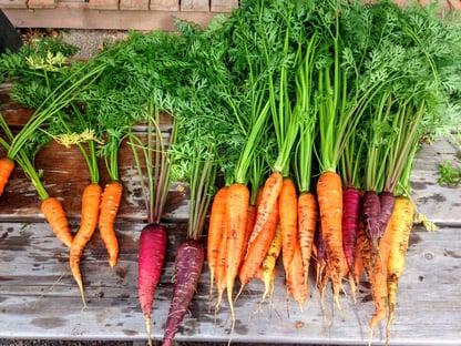 carrot-2743498_1920-pixabay