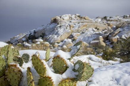 pixaby_snow cactus